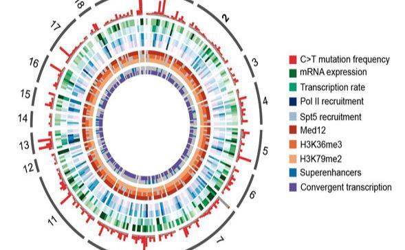 Atlas completo de mutaciones vinculadas con el desarrollo de linfomas