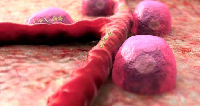 Demuestran en ratones la eficacia de una combinación de fármacos contra la diabetes