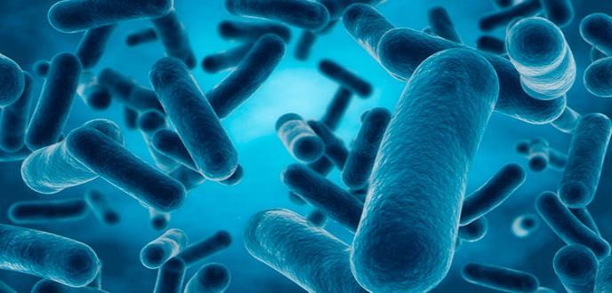 Descubren que cápsulas bacterianas pueden ser útiles agentes terapéuticos
