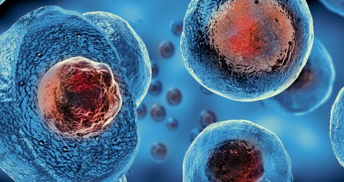 Células madre resisten el envejecimiento y mantienen la regeneración muscular hasta la vejez