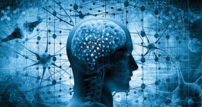 Publicado el primer mapa genético de la corteza cerebral