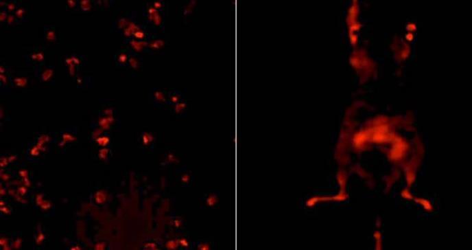 Crean nuevos sensores para la detección y el estudio de la evolución tumoral