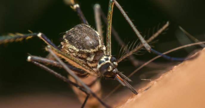 América Latina: alerta salubrista por dramático aumento de dengue