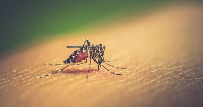Continúa la lucha contra el dengue, una enfermedad mortal pero prevenible