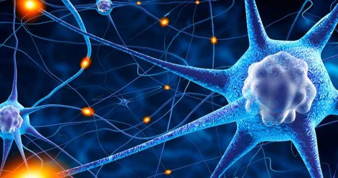 Descubren un interruptor molecular para reparar los trastornos del sistema nervioso central