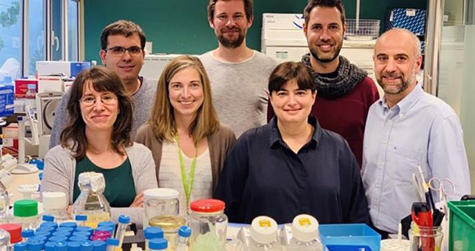 Diseñan anticuerpos que bloquean una ruta de entrada del ébola en células humanas