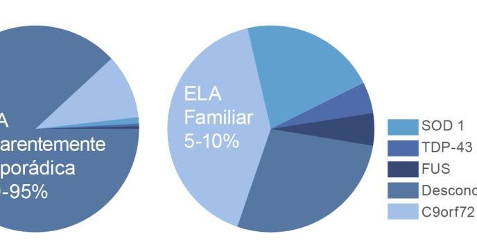 La Esclerosis Lateral Amiotrófica (ELA): Aspectos clínicos y genéticos de la enfermedad