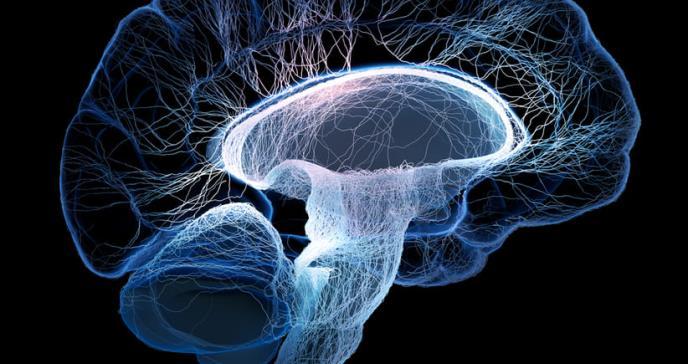 El cerebro femenino envejece más lento que el cerebro masculino