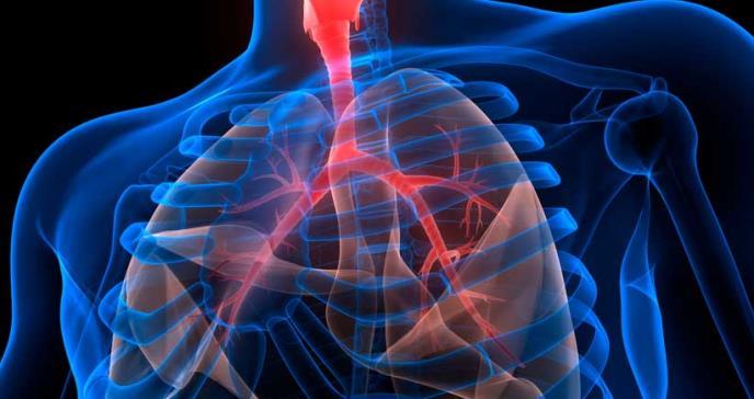 Eliminación del gen del reloj corporal protegería contra la neumonía