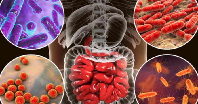 Descubren 2.000 bacterias presentes en el intestino humano