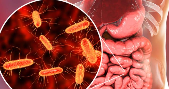 El microbioma de una persona cambia al emigrar a EEUU