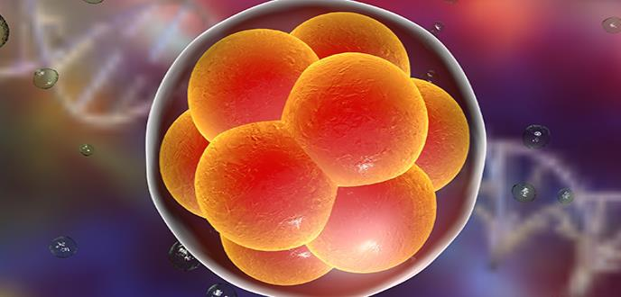 Científicos estadounidenses editan embriones humanos para combatir enfermedades congénitas