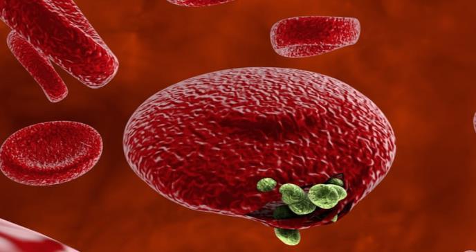Estudian el desarrollo de una vacuna antimalaria vivax