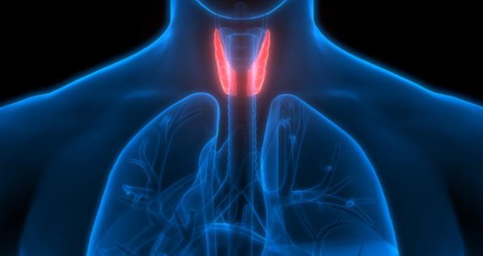 Estudio descubrió resultados cardiovasculares similares entre fármacos genéricos y comerciales para hipotiroidismo