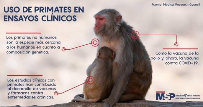EE. UU alerta sobre escasez de primates para pruebas de la vacuna contra COVID-19