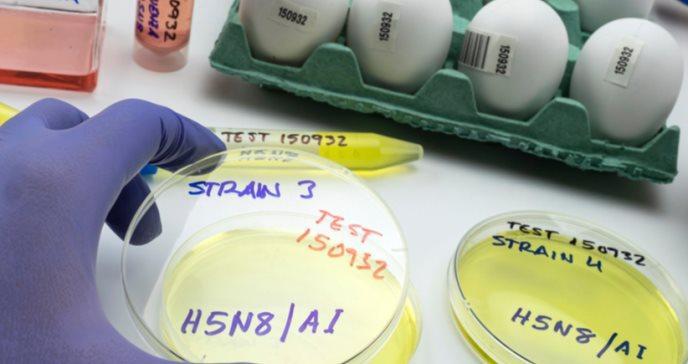 Se registra el primer contagio de gripe aviar en humanos, se trata del patógeno H5N8
