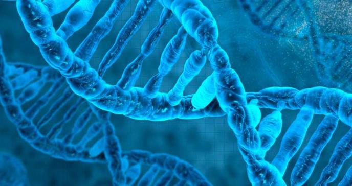 Hallan el gen detrás del diseño del rostro humano