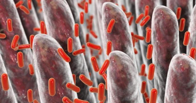 Identifican bacteria intestinal que puede ayudar a combatir la obesidad y el estrés