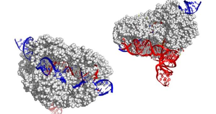 Jennifer Doudna presenta una nueva herramienta CRISPR de edición genética