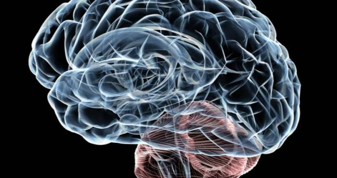 La corteza insular advierte a otras partes del cerebro sobre posibles eventos dolorosos