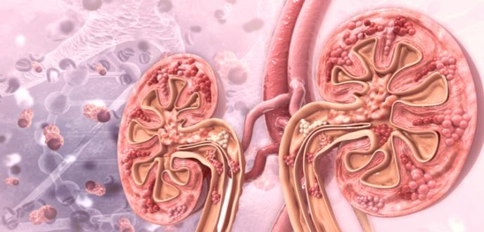 La diabetes como causa de fallo renal