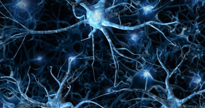La estimulación cerebral recupera la pérdida de memoria asociada a la edad
