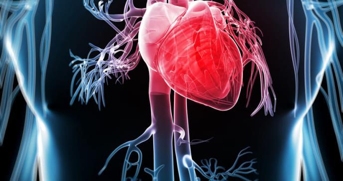 El corazón de las personas en EE.UU. envejece más rápido que otros órganos