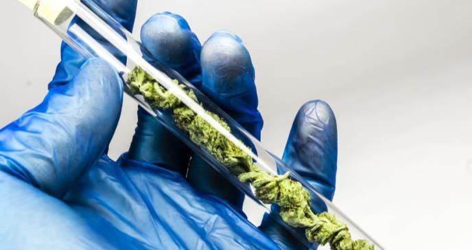 OMS reconsidera su posición sobre el cannabis en aplicaciones médicas