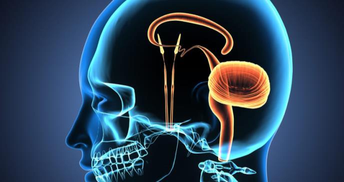 El cerebelo cumple funciones más vitales de las que se creían