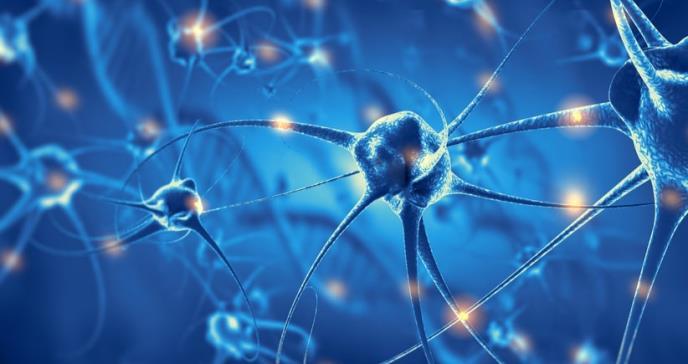 Logran reconectar un grupo de neuronas alteradas por una enfermedad neurodegenerativa