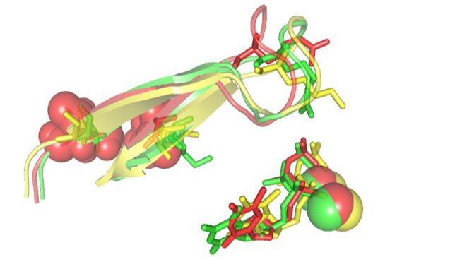Nuevas claves para entender la resistencia del VIH a los fármacos antirretrovirales