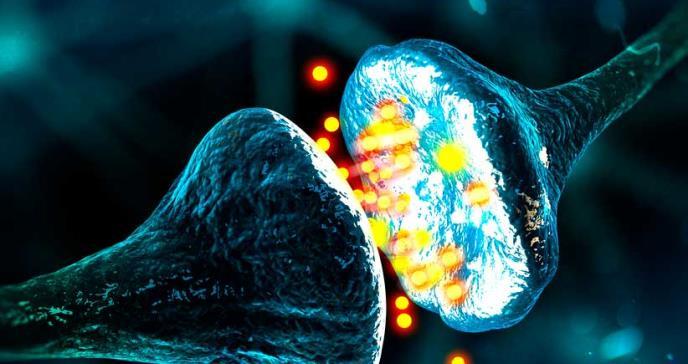 Nuevo mecanismo para frenar la pérdida de sinapsis en el alzhéimer