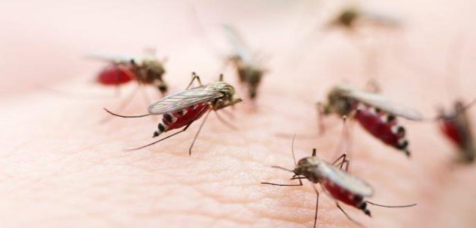 Paludismo, una amenaza para América Latina