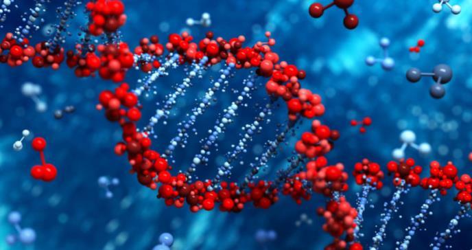 Patentado un suplemento de selenio que repara el daño en el ADN provocado por alcohol