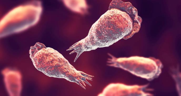 Qué es la ameba come cerebros y cómo puedes evitar que te contagie