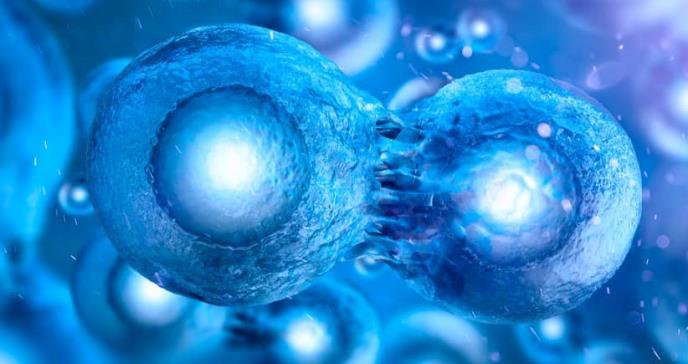Reprogramación celular permitiría producción de óvulos y espermatozoides