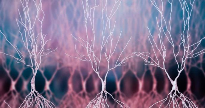 Rosehip, la neurona de rosa mosqueta que hace únicos a los seres humanos