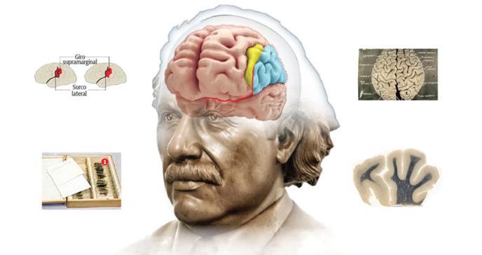 El peculiar viaje del cerebro de Albert Einstein