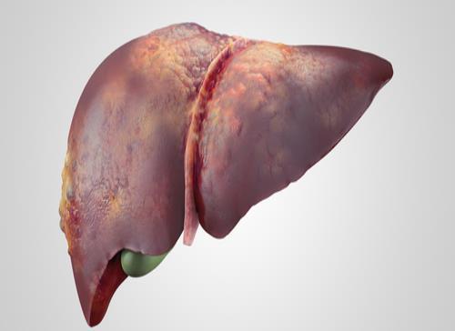Describen un mecanismo de progresión y regresión de la fibrosis hepática
