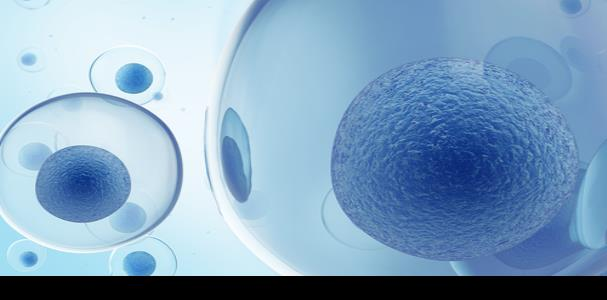 Un trasplante de células madre podría revertir la ceguera