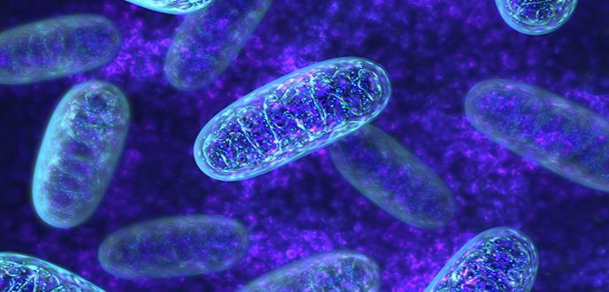 Las mitocondrias de una célula tumoral predicen su sensibilidad a la quimioterapia