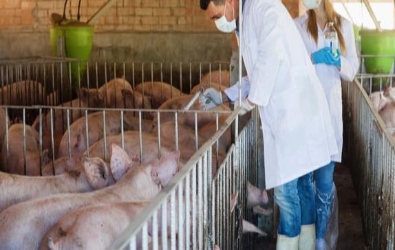 Antibióticos en animales: una indiferencia que pagaremos cara