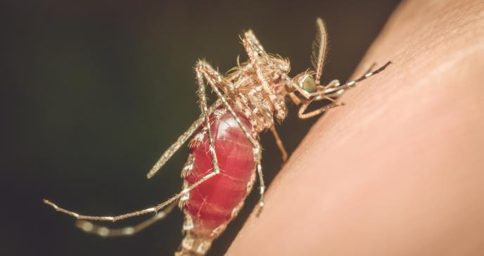 Expertos advierten aumentos de casos de malaria en Venezuela