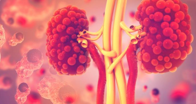 Terapia de células madres: futuro tratamiento en estudio para la enfermedad renal