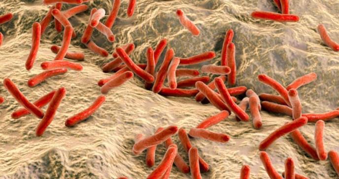Sida, malaria, sífilis... cómo prevenir las enfermedades infecciosas para las que no hay vacuna