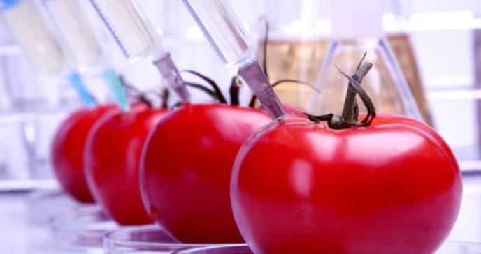 Tomates, futuro aliado de la industria farmacéutica