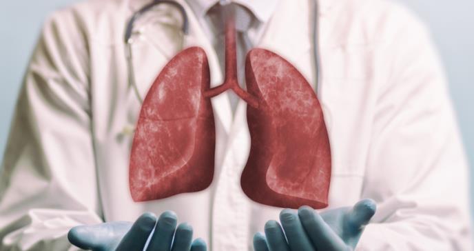 Científicos logran revivir un pulmón humano al conectarlo a un cerdo vivo