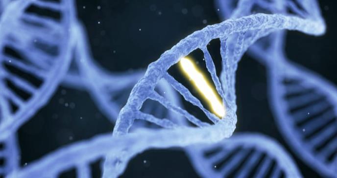 Una mutación genética apaga el apetito y evita el riesgo de obesidad