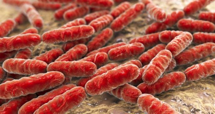 Un test detecta las bacterias resistentes a antibióticos en pocos minutos