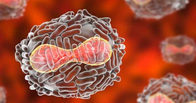 Qué es la viruela de los monos, la rara infección que descubrieron en un paciente en Reino Unido